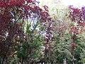 Los colores del Jardín de la Isla - panoramio.jpg