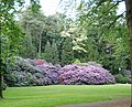 Lovely Rhodondendrons in the gardens of Oosterbeek - panoramio.jpg