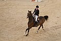 Luciana Diniz & Lennox 180 - 2013 Longines Global Champions Tour-3.jpg