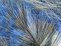 Mélange de fibres de polyester et de soies pour pinceaux.jpg