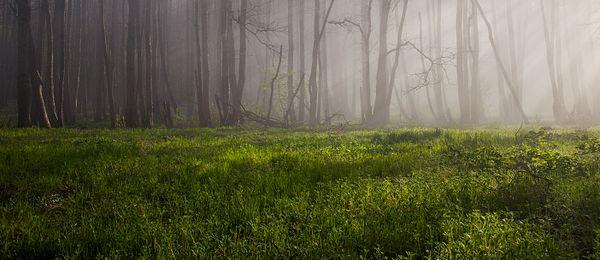 Muraste Nature Reserve, Estonia