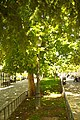 MADRID A.V.U. JARDIN-CINTA S. FRANCISCO EL GRANDE - panoramio (1).jpg