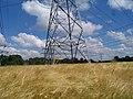 Maasbracht electricity poles 4 - panoramio.jpg