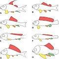Macrosemiiformes 1.jpg