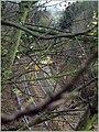 Mainline through the trees (506444574).jpg