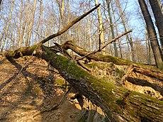 Malužín, přírodní rezervace (6).JPG