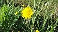 Mamo khora HD 31 - panoramio.jpg