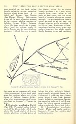 Manual of the grasses of the United States (Page 144) BHL42020783.jpg