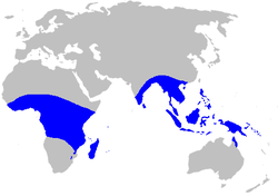 Musaceae distribution