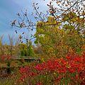 Maple Grove (2694332380).jpg