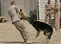 Marines in Iraq DVIDS52605.jpg