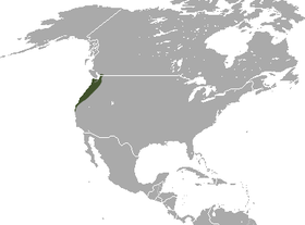 Marsh shrew range