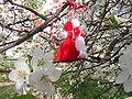 Martenitsa-blossom.JPG