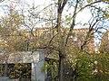 Mayakovskogo Prov., 7 (city garden) 2.jpg
