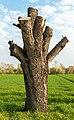 Meckenheim (Pfalz) Erste Lehmgrubengewanne 008 2020 04 09.jpg