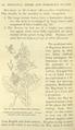 Medicinal Herbs Poisonous Plants-131.png
