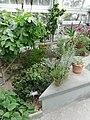 Mediterranean - US Botanic Gardens 12.jpg