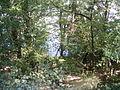 Mehedinți, zona golfului Bahna (31).JPG