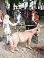 Meisjes en ponies paardenmarkt Heenvliet.jpg