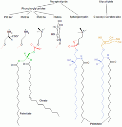 role of charged lipids in membrane structure Theory structures of the epha2 receptor at the membrane: role of lipid interactions graphical abstract highlights d epha2 receptor ectodomain mainly interacts with lipid bilayers via its fn2 domain d anionic lipids are recruited by positively charged residues in fn2.
