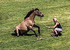 Merfeld, Wildpferdefang, Vorprogramm -- 2014 -- 0533.jpg