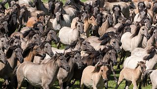 Stampede act of mass impulse among herd of animals or a crowd of people