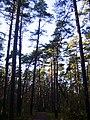 Mezs - panoramio (8).jpg
