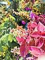 Miana Plant.jpg