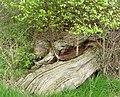 Miniature garden - Flickr - gailhampshire.jpg