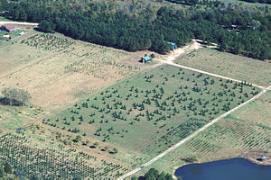 Christmas tree production - An aerial view of a Christmas tree farm in the U.S. state of Missouri.