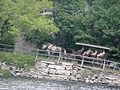 Mohonk Mountain House Horse Carriage 1.jpg