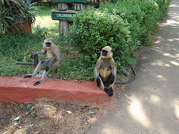 Monkeys Friends Forever.jpg