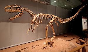 Tetanurae - Skeleton of Monolophosaurus jiangi