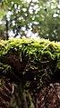 Mossy branch.jpg