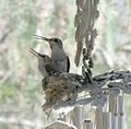 Mother and Nestling-2.jpg