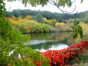 Mount Lofty Ranges - Mount Lofty Botanic Garden