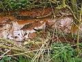 Muddy Brook - geograph.org.uk - 1305564.jpg