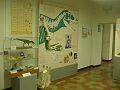 Museo Fossili Besano 3.jpg