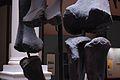 Museo de La Plata - Diplodocus carnegii rodillas.jpg