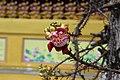 Nụ hoa tại Đại Nam.JPG