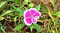 NATURE Flower1.jpg