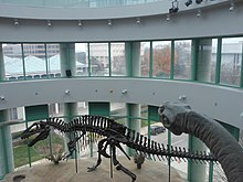 Dinosaur Displays At North Carolina Museum Of Natural Science