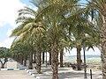 Nabi Shu'ayb palms.jpg