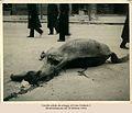 Napoli 1943, Corso Umberto, cavallo.jpg