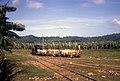 Narrow gauge banana railway (38274522896).jpg