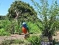 National Arboretum in July (23464853492).jpg