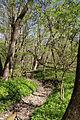 Nationalpark Hainich-Erlebnispfad Feensteig-by-Leila-Paul-IMG 3975 02.JPG