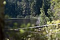 Nationalpark Schwarzwald Wildsee-8.jpg