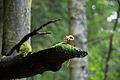 Natur im Einklang am Triberger Wasserfall.jpg