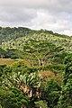 Natura Mauriziana - panoramio.jpg